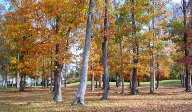 Lot 7 Pungo Drive, Hertford, NC 27944 (#92681) :: The Kris Weaver Real Estate Team
