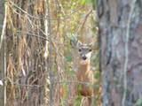 126 Hunters Run Drive - Photo 32