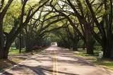 454 Little Pines Court - Photo 6