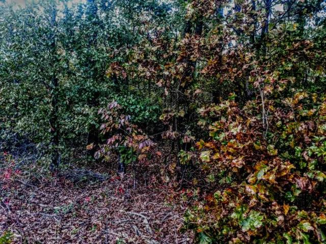 Lot7 Northgate Drive, BARNWELL, SC 29812 (MLS #104988) :: RE/MAX River Realty