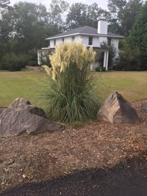 700 Edisto, JOHNSTON, SC 29832 (MLS #101577) :: Shannon Rollings Real Estate