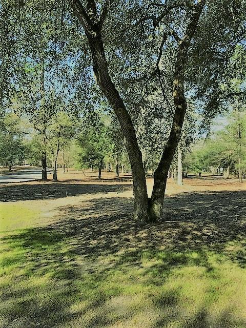 Lot 6 Wild Oaks Lane, AIKEN, SC 29803 (MLS #101929) :: RE/MAX River Realty