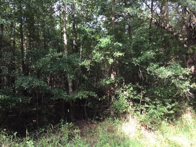 0 Lake Cynthia Dr, BLACKVILLE, SC 29817 (MLS #104323) :: Venus Morris Griffin | Meybohm Real Estate