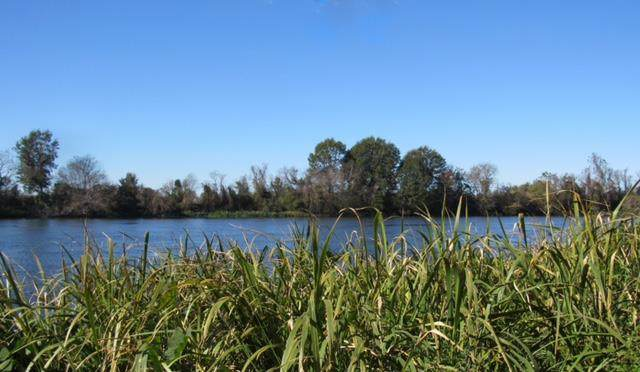 Lot 41 Riverside Plantation Road - Photo 1