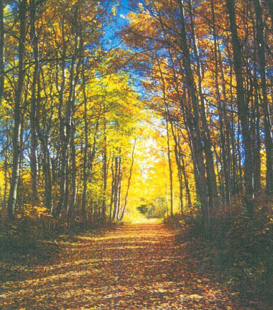 LOT 25 Wolf Creek Lane - Photo 1