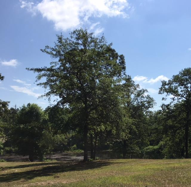 608 Summer Lakes Drive, AIKEN, SC 29805 (MLS #103201) :: Shannon Rollings Real Estate