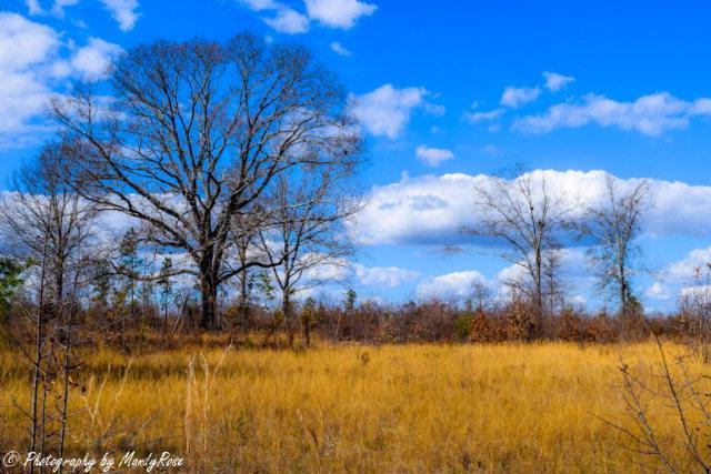 0000 Shaws Fork Road - Photo 1