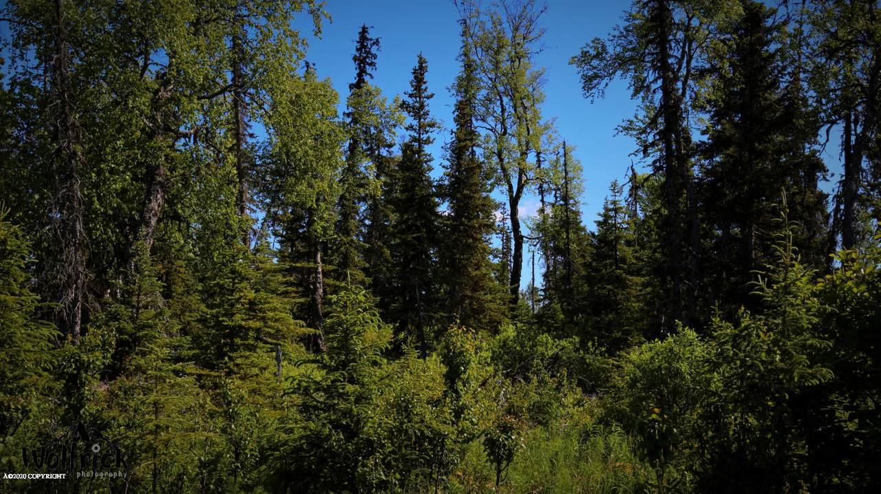 C27 Alaskan Wildwood Ranch(R) - Photo 1
