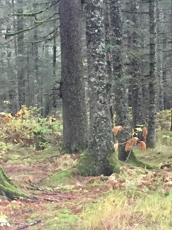 https://bt-photos.global.ssl.fastly.net/alaska/1280_boomver_1_20-8343-2.jpg