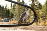 47093 Merlin Drive - Photo 34