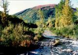 000 Mcwilliams - Gold Creek Trail - Photo 5