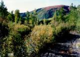 000 Mcwilliams - Gold Creek Trail - Photo 7