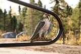 47300 Merlin Drive - Photo 1