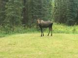 39112 Moose River Drive - Photo 12