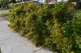 621 Vine Avenue - Photo 8