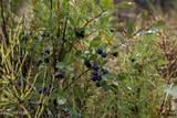D3 Alaskan Wildwood Ranch(R) - Photo 3