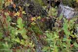 D3 Alaskan Wildwood Ranch(R) - Photo 5
