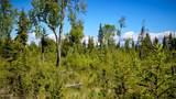 C7 Alaskan Wildwood Ranch(R) - Photo 15