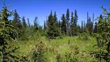 C7 Alaskan Wildwood Ranch(R) - Photo 20