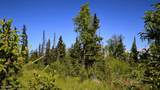 C7 Alaskan Wildwood Ranch(R) - Photo 21