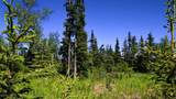 C7 Alaskan Wildwood Ranch(R) - Photo 4
