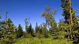 C7 Alaskan Wildwood Ranch(R) - Photo 5