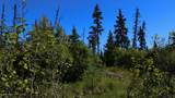 C27 Alaskan Wildwood Ranch(R) - Photo 9