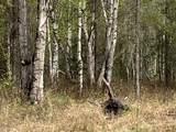6615 Spruce Hen Drive - Photo 4