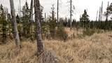 C23 Alaskan Wildwood Ranch(R) - Photo 33