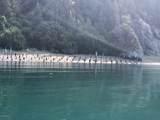 49726 Halibut Cove - Photo 3