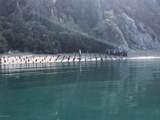 49726 Halibut Cove - Photo 7