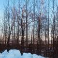 7000 Moose Ridge Circle - Photo 3
