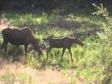 L12 B7 June Creek - Photo 32