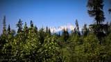 D18 Alaskan Wildwood Ranch(R) - Photo 2