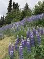 L8 B4 Potter Highlands Drive - Photo 10