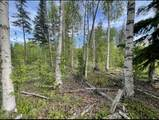 L20 B28 Enchanted Forest - Photo 1