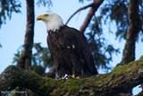 L2BC Wadleigh ISland - Photo 13