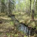 Tract A Meadow Lakes Loop - Photo 1