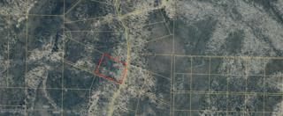 D28 Alaskan Wildwood Ranch, Nikolaevsk, AK 99556 (MLS #17-8051) :: Team Dimmick