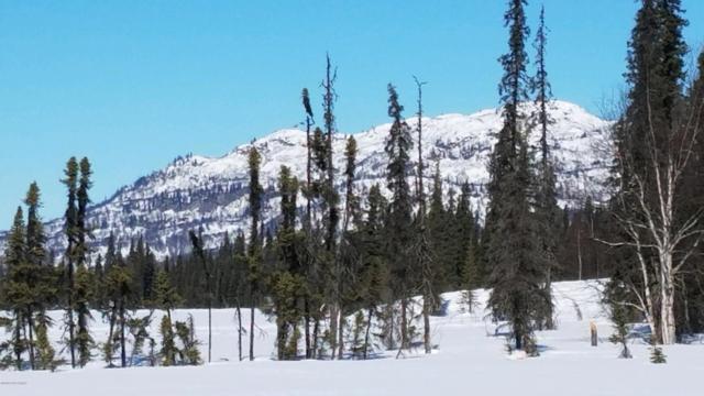 L1 B4 No Road, Remote, AK 99000 (MLS #18-19317) :: Channer Realty Group