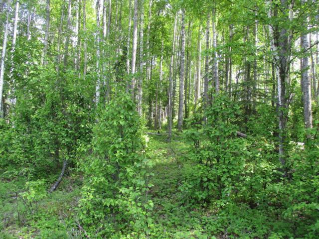 15373 W Necrason Drive, Big Lake, AK 99652 (MLS #18-265) :: Real Estate eXchange