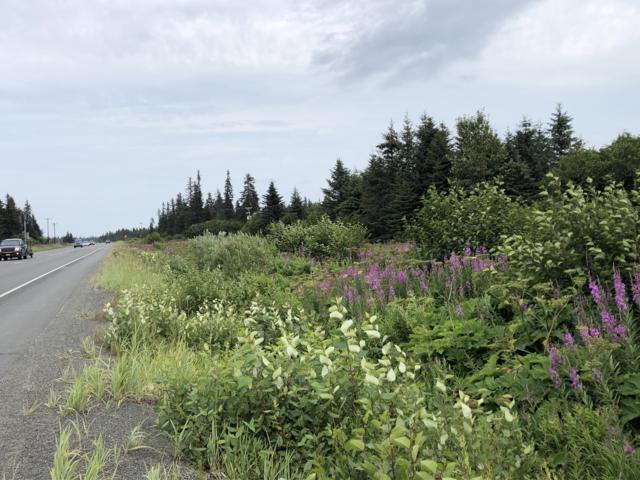 30720 Sterling Highway, Anchor Point, AK 99556 (MLS #19-13085) :: RMG Real Estate Network | Keller Williams Realty Alaska Group
