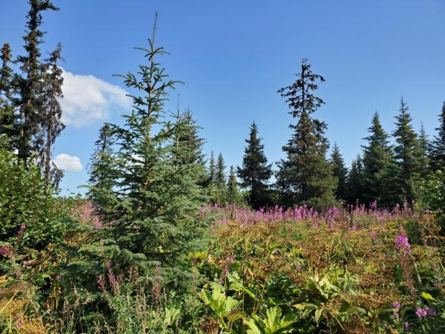 5800 Clearwater Drive, Homer, AK 99603 (MLS #19-13707) :: RMG Real Estate Network | Keller Williams Realty Alaska Group