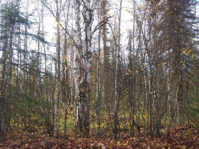48764 E Brokealine Drive, Willow, AK 99688 (MLS #19-16704) :: RMG Real Estate Network | Keller Williams Realty Alaska Group