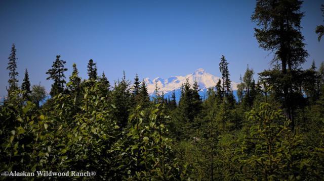 D23 Alaskan Wildwood Ranch(R), Anchor Point, AK 99556 (MLS #19-476) :: Alaska Realty Experts