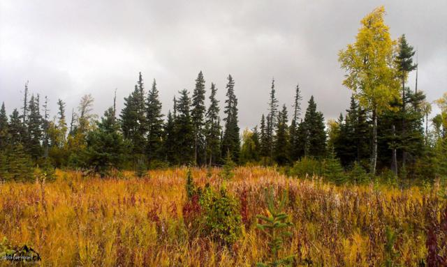 D26 Alaskan Wildwood Ranch(R), Anchor Point, AK 99556 (MLS #19-479) :: The Huntley Owen Team