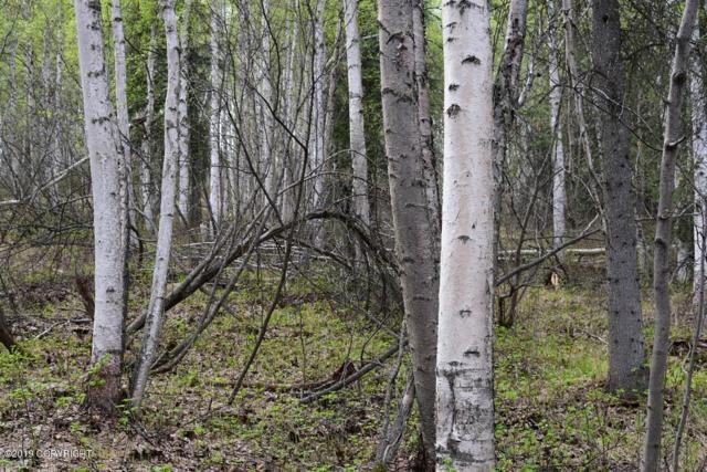 Tr A Blue Fox Run, Fairbanks, AK 99712 (MLS #19-7932) :: Powered By Lymburner Realty