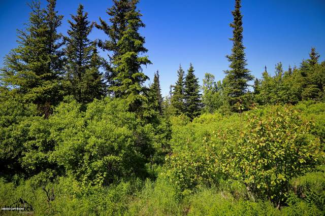 C16 Alaskan Wildwood Ranch(R), Anchor Point, AK 99556 (MLS #20-3236) :: RMG Real Estate Network | Keller Williams Realty Alaska Group