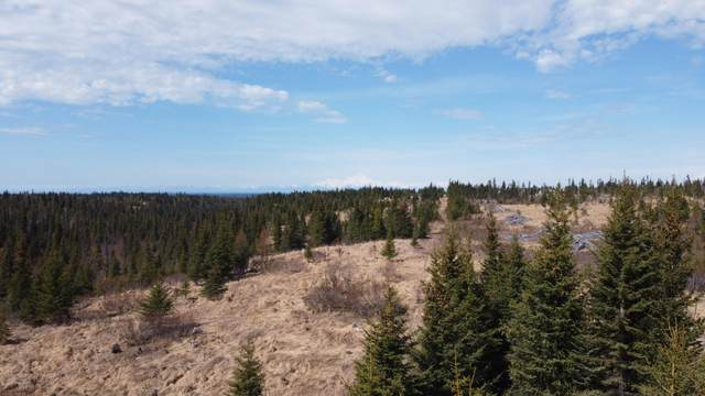 Tr 1 Nahodka Drive, Anchor Point, AK 99556 (MLS #20-6724) :: Wolf Real Estate Professionals