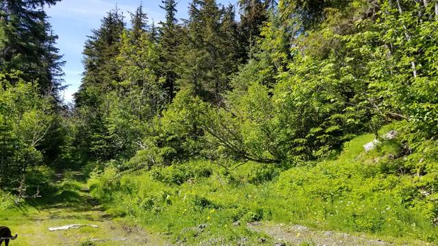 L7 Conifer Road, Haines, AK 99827 (MLS #20-8388) :: Wolf Real Estate Professionals